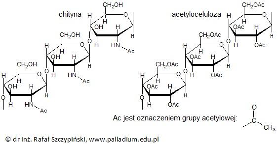 Uzupełnienie tekstu dotyczącego struktury cząsteczek chityny oraz acetylocelulozy