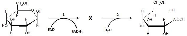 Rysowanie wzoru Hawortha laktonu kwasu D-glukonowego